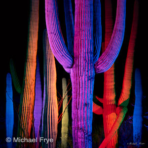 Light-Painted Saguaro Cacti
