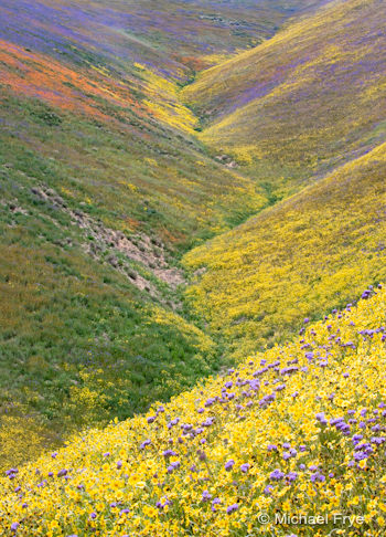 Wildflowers in Carrizo Plain National Monument, April 2006