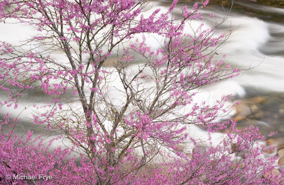 Redbud and rapids along the Merced River, April 5th, 2010