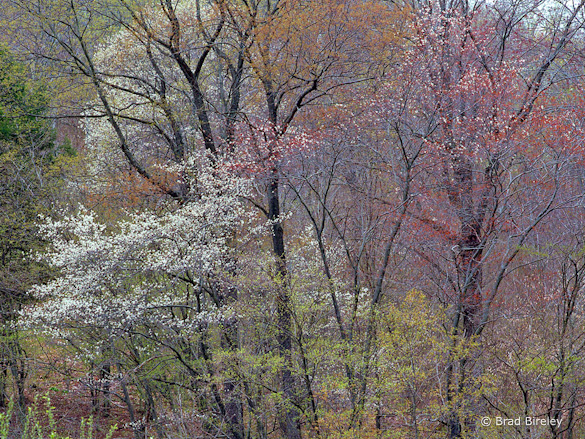 """Springtime in Potter County, PA"" by Brad Bireley"