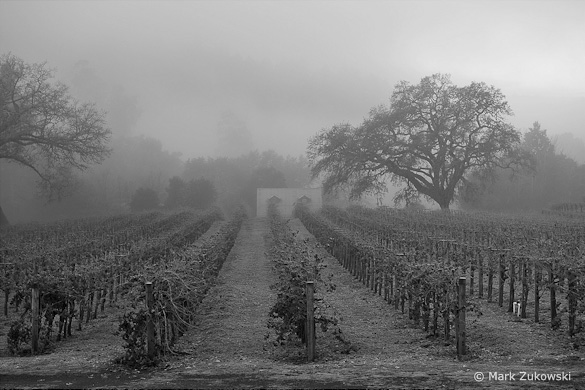 """Fog Shrouded Merlot"" by Mark Zukowski"
