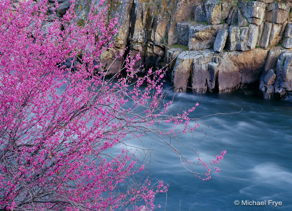 Redbud and Rocks along the Merced River. Soft light emphasized the colors.