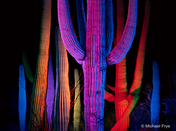 Saguaro Cacti at night—another example of telephoto compression
