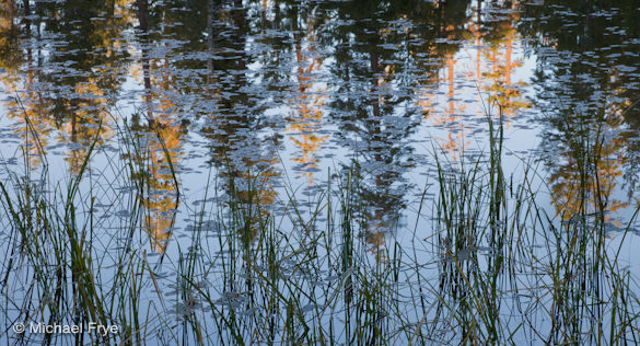 Reeds and reflected trees at Siesta Lake, Yosemite