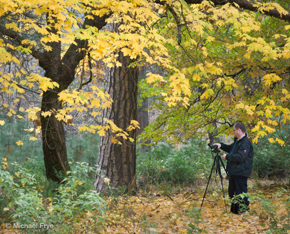 Workshop participant Jim photographing a colorful maple