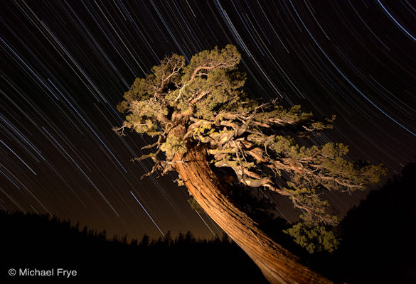 23. Juniper and star trails near Olmsted Point, Yosemite