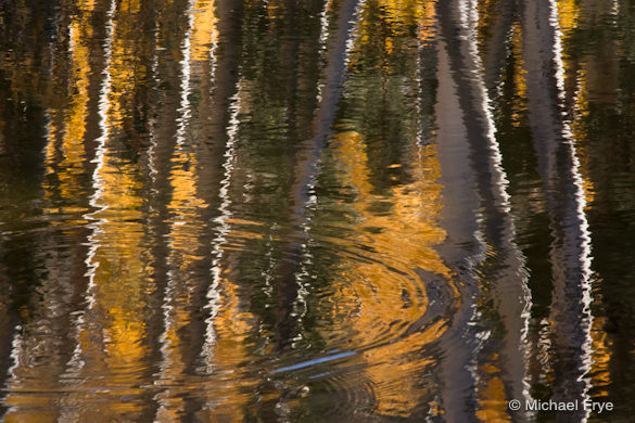 31. Eastside aspen reflections