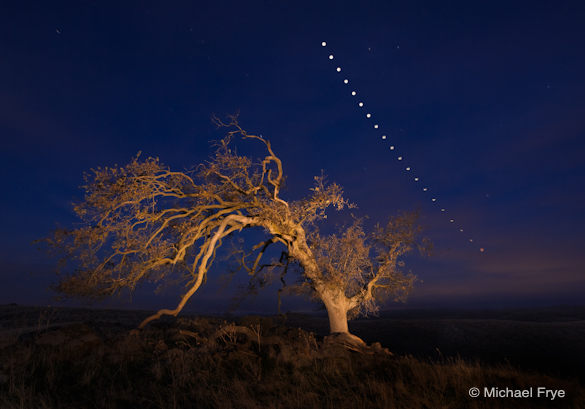 Oak Tree and Lunar Eclipse Sequence, December 10th, 2011
