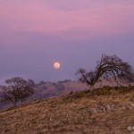 Moonrise, Sierra foothills, Sunday evening