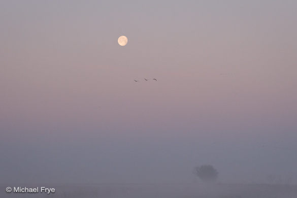 5. Moon, willow tree, and sandhill cranes