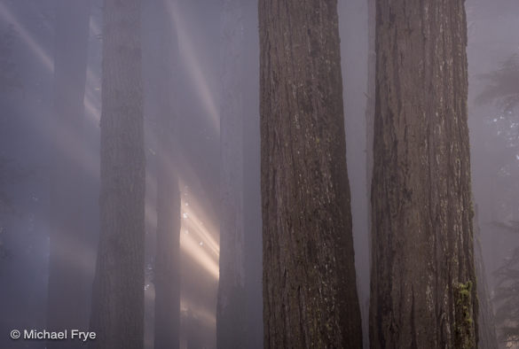 Close Encounters in the redwoods