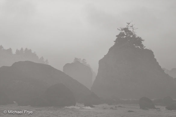 Misty sea stacks with bonsai trees near Trinidad
