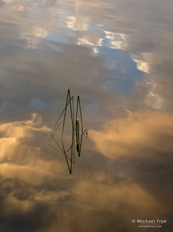 Reeds and Cloud Reflections no. 3