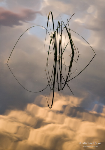 Reeds and Cloud Reflections no. 4