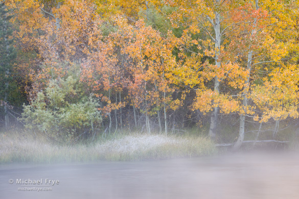 Misty creek with aspens along the June Lake Loop, Sunday morning