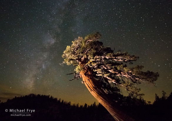 Sierra juniper and the Milky Way, Olmsted Point, Yosemite NP, CA, USA