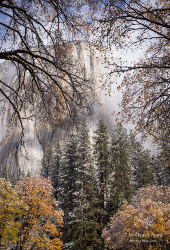 El Capitan after an autumn snowstorm from El Capitan Meadow, Yosemite NP, CA, USA