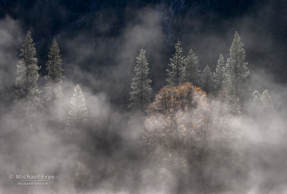 Oak, pines, and mist, El Capitan Meadow, Yosemite NP, CA, USA
