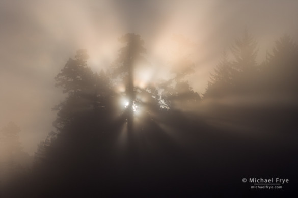 Sun rising through fog, Prairie Creek Redwoods SP, CA, USA