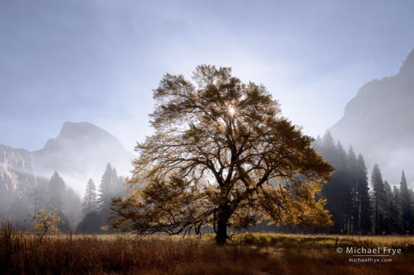 Autumn morning, Half Dome and elm tree, Yosemite. This main features of this image, like the trees and Half Dome, stand out as dark-against-light silhouettes. The lighting direction is obvious.