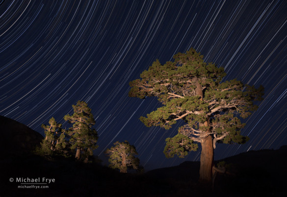 Star Trails and junipers east of Sonora Pass, Toiyabe NF, CA, USA