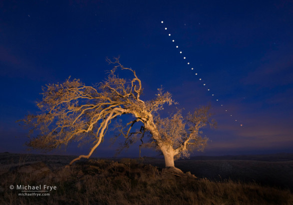 Oak tree and lunar eclipse sequence, Mariposa County, Sierra foothills, CA, USA