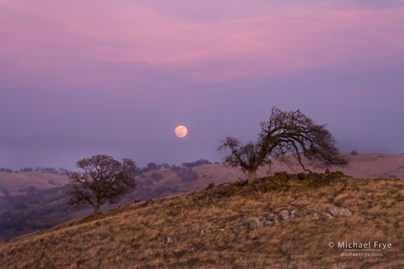 Moonrise, Sierra foothills, Mariposa Country, CA, USA