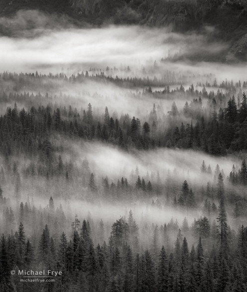 Trees and fog, Yosemite Valley, Yosemite NP, CA, USA