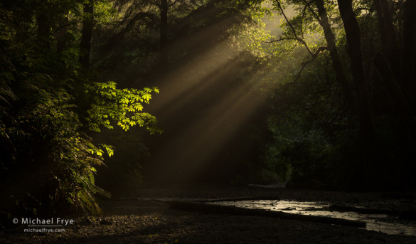 Sunbeams at the mouth of Fern Canyon, Prairie Creek Redwoods SP, CA, USA