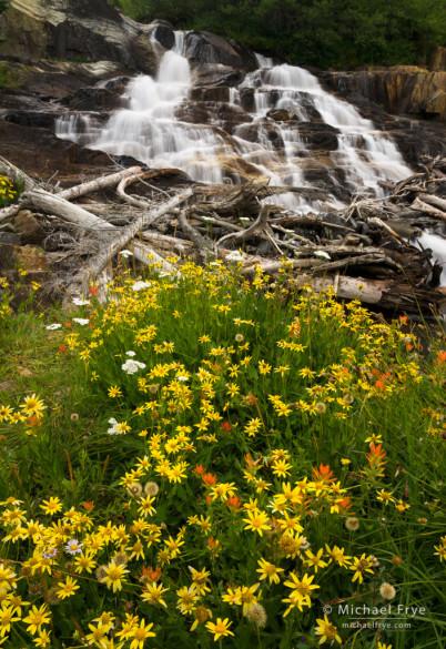 Wildflowers and cascade, eastern Sierra Nevada, Inyo NF, CA, USA