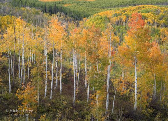 Autumn colors, Gunnison NF, CO, USA