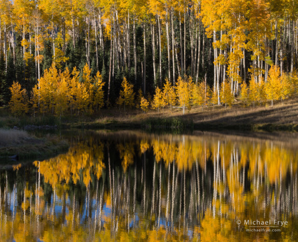 Aspen reflections, Uncompahgre NF, CO, USA