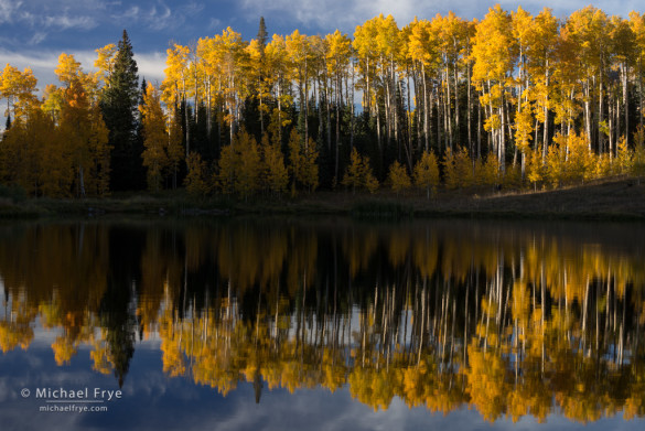 Aspens reflected in a mountain lake, Uncompahgre NF, CO, USA