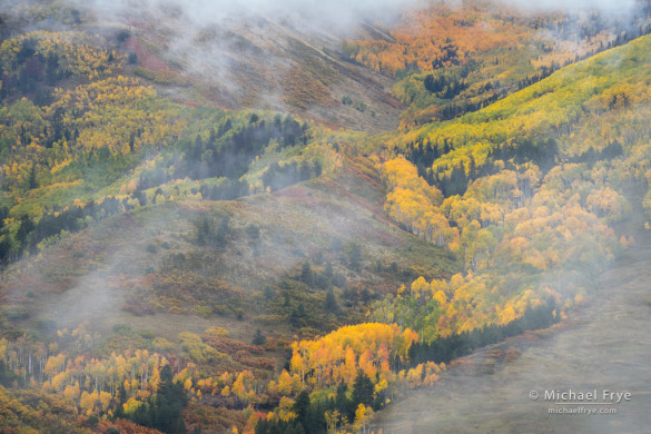 Aspens, firs, and mist, autumn, Uncompahgre NF, CO, USA