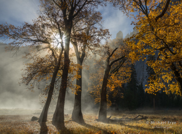 Sun, mist, and oaks in El Capitan Meadow, Yosemite NP, CA, USA