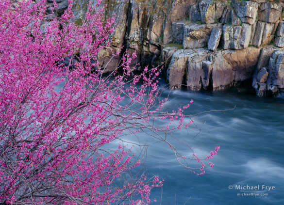 Redbud, rocks, and the Merced River, Stanislaus NF, CA, USA