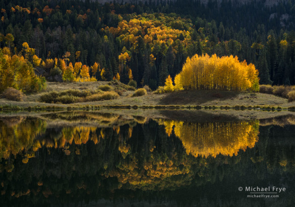 Backlit aspens and reflections, Uncompahgre NF, CO, USA