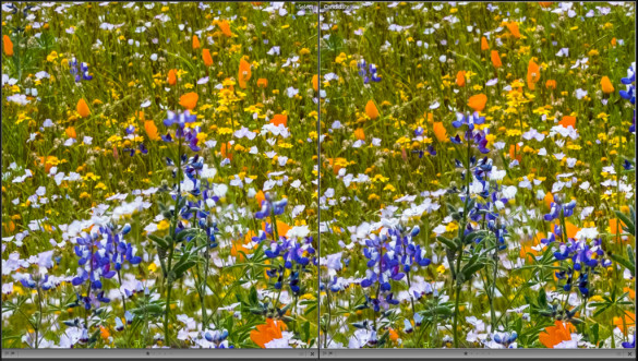 Focus stacking in Photoshop (left) compared to Helicon Focus (right). Helicon did a better job of picking the sharpest parts of each image to include in the final blended photograph.